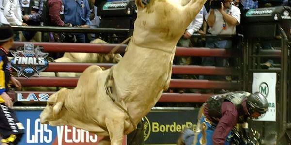 touro rodeio bodacious
