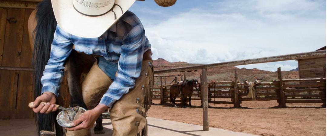 Saiba mais sobre o uso e cuidados das ferraduras nos cavalos