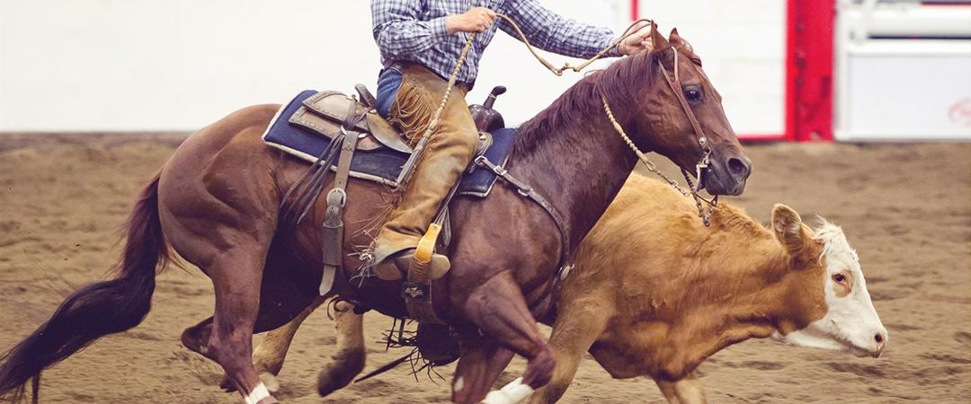 Working Cow Horse: Modalidade esportiva do mundo coutry