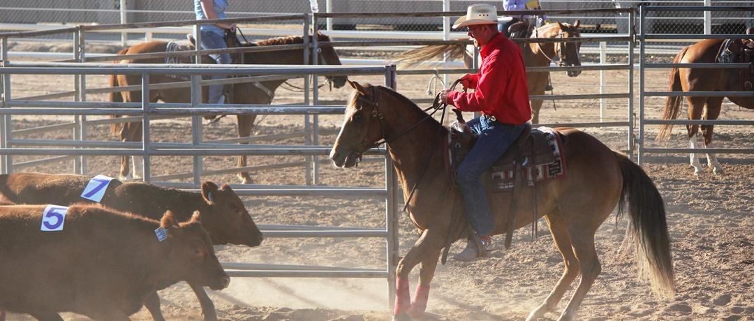 Você conhece o Ranch Sorting?
