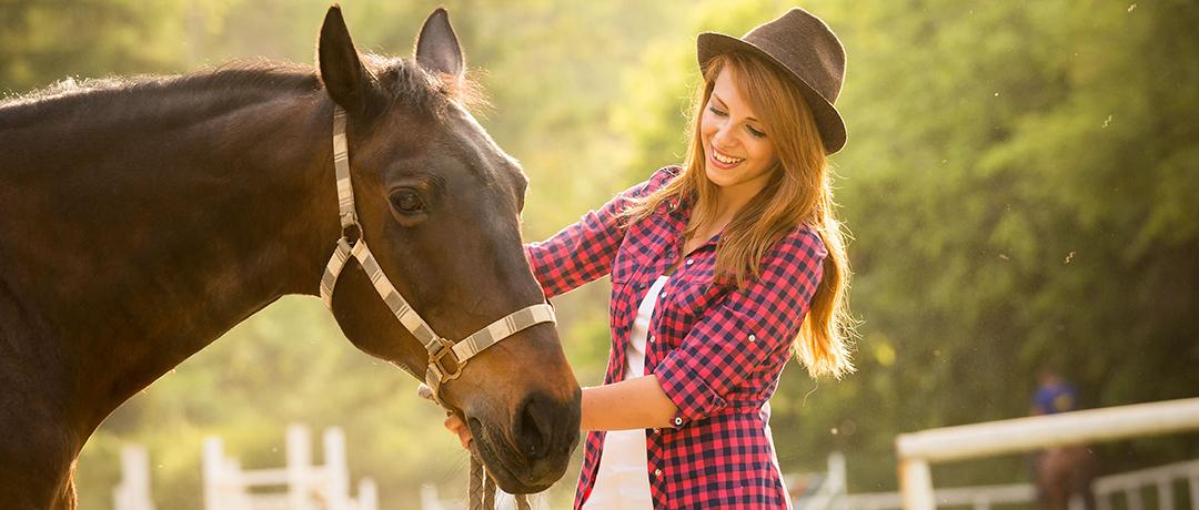 Utensílios indispensáveis para cuidar de um cavalo