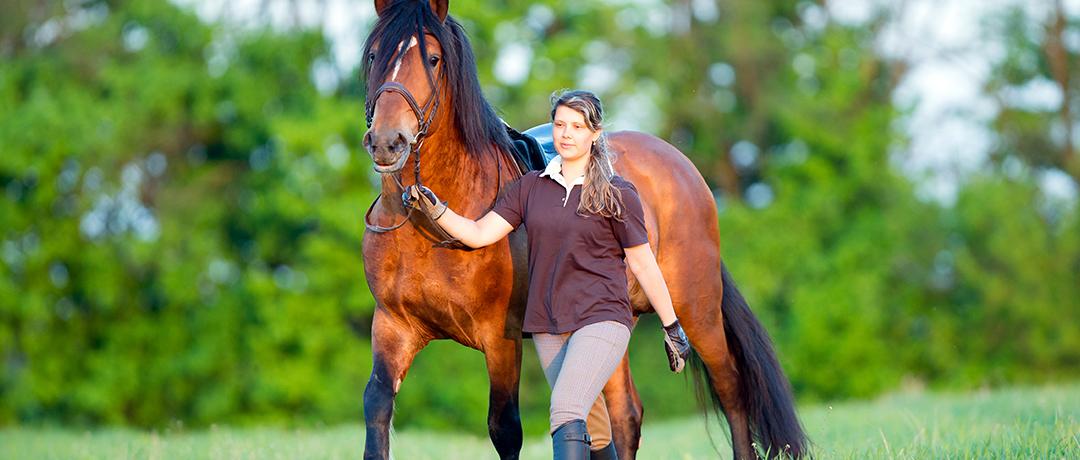 Acessórios para proteger seu cavalo