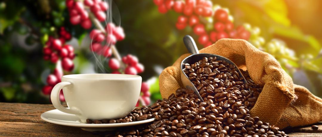 Como manter uma plantação de café
