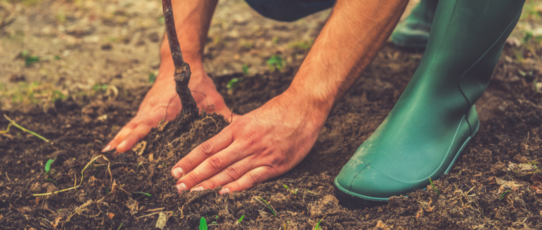 Preparo do solo para Plantio