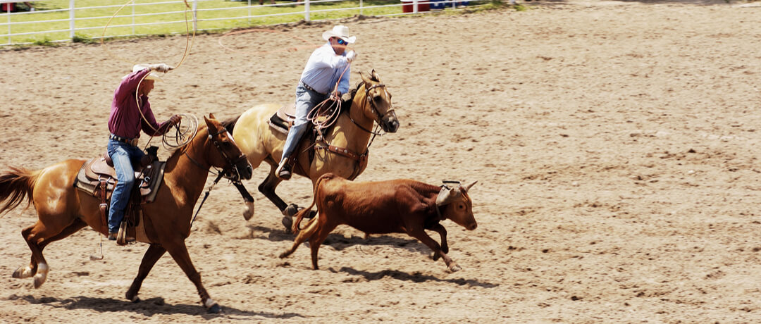 Praticantes do Team Roping