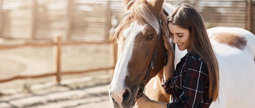 Como cuidar da crina de seu cavalo