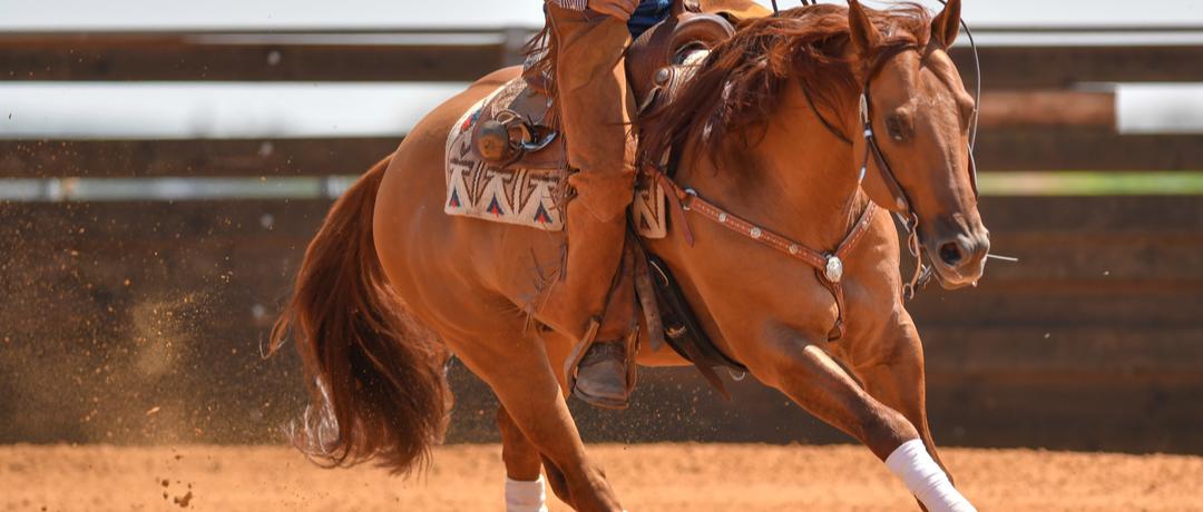 bridao-de-cavalo