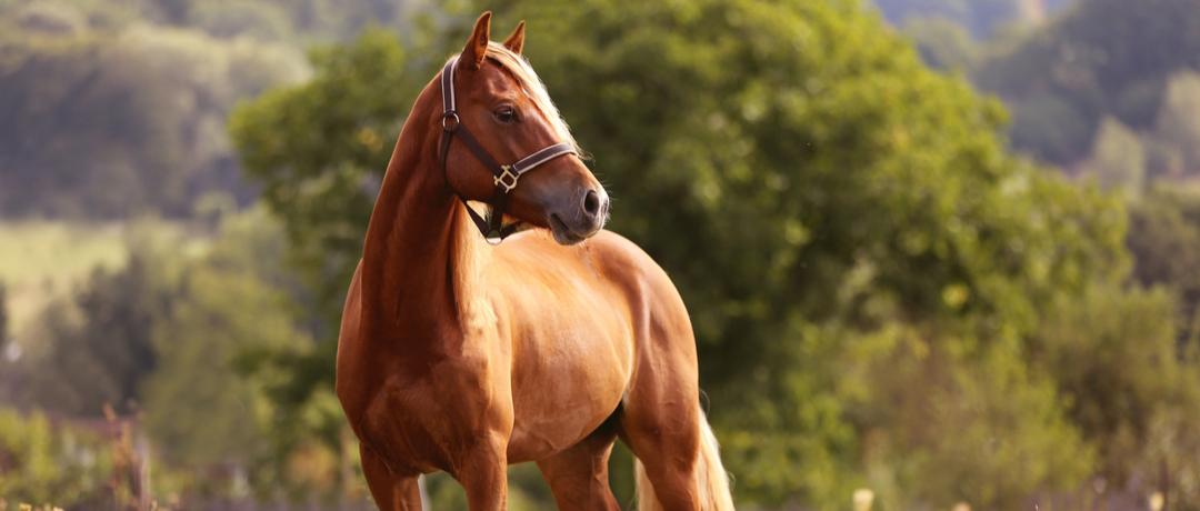 onde-comprar-cavalo