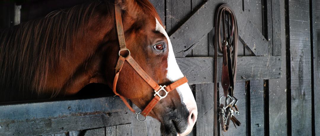 cavalo-com-raiva