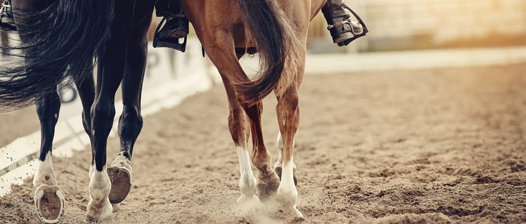 Casco do Cavalo