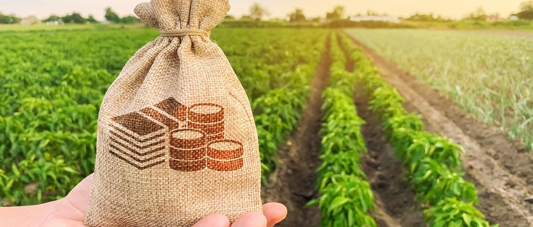 Agricultura Sustentável