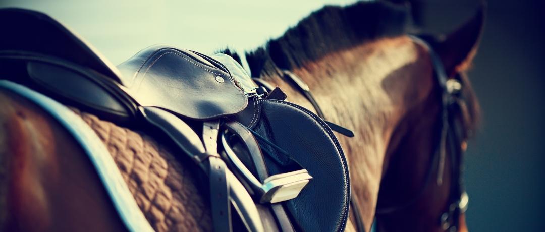 Ração para Cavalo