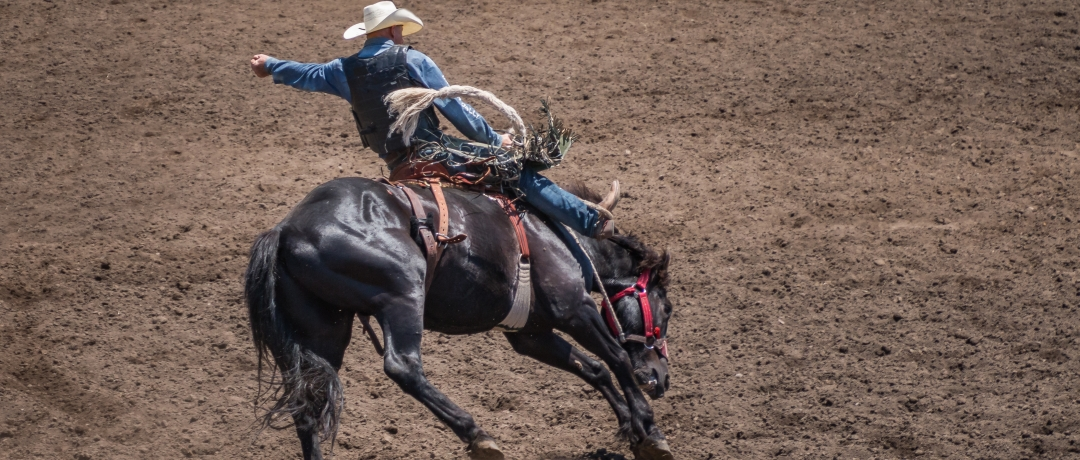 Salva Vidas de Rodeio